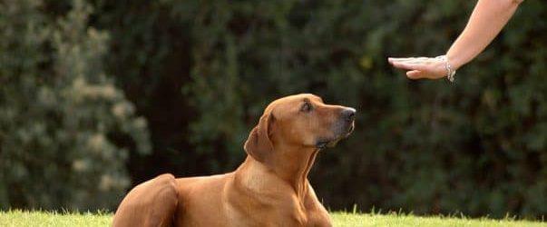 dressage chien1