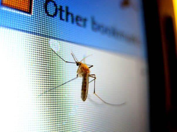 mosquito 434904 640